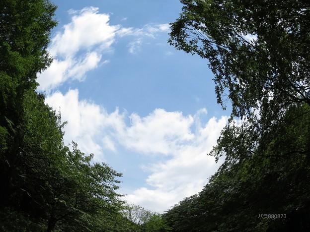 森からの空♪