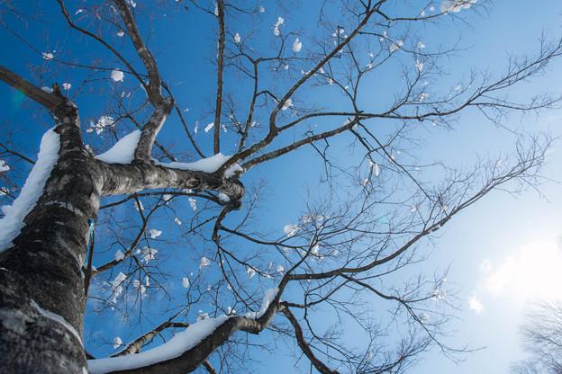 写真: 雪積もる  ~look up at winter~