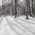 静かな雪の森