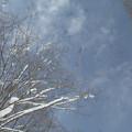 青空から雪が舞ってくる