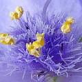 ムラサキツユ草の花の中