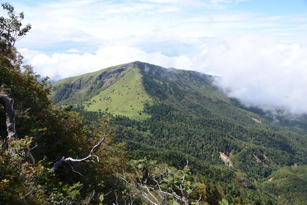 国境稜線のやせ尾根から根子岳