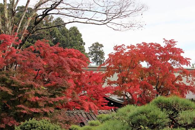 写真: 27.11.9鹽竈神社社務所付近の紅葉