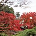 27.11.9鹽竈神社社務所付近の紅葉