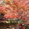 写真: 27.11.10圓通院の紅葉