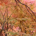 写真: 27.11.10「幽観」扇谷の紅葉