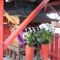 写真: 27.11.30雀島白王竜神社本殿