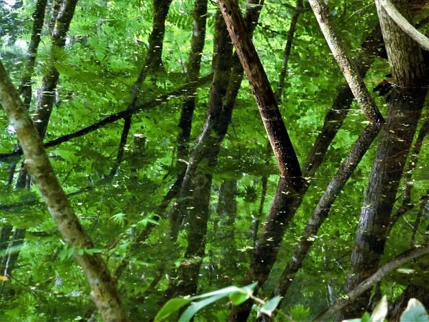 アカショウビンの住む神秘の森