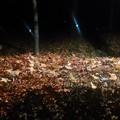 写真: 夜の林試の森公園