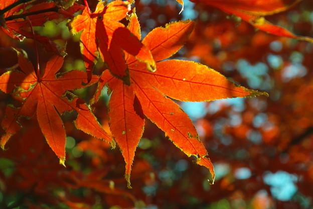 053SD14_2099 清澄庭園の紅葉