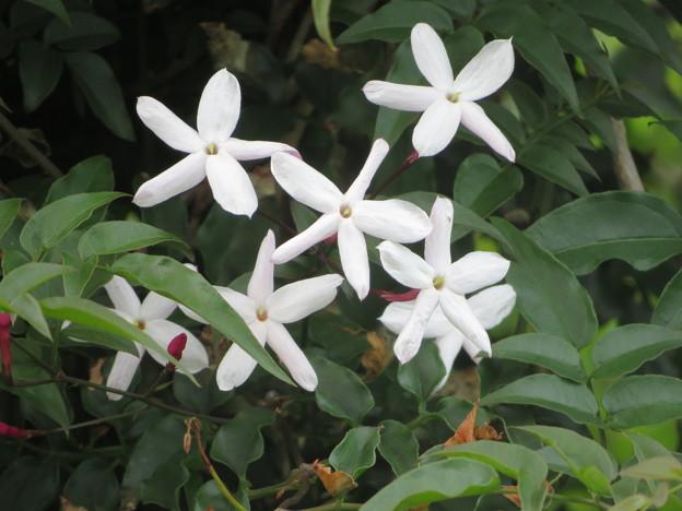 素朴な花ね