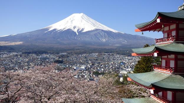 新倉山浅間公園忠霊塔の桜