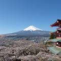 Photos: 新倉山浅間公園忠霊塔の桜