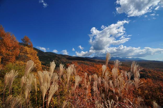 写真: 高原は秋の深まりを