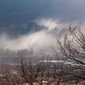 写真: 川霧