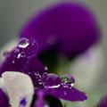 写真: 冷たさから美しさに 雪~雨
