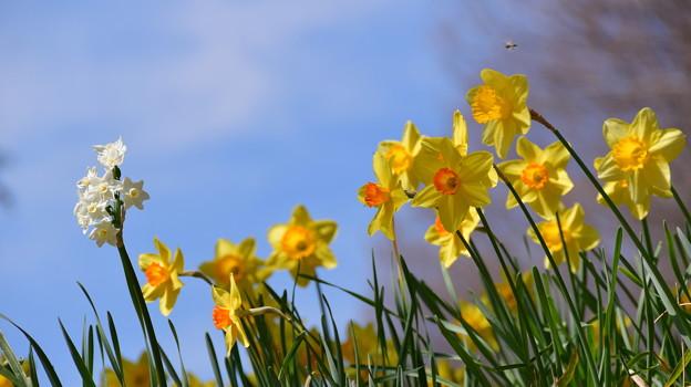 Photos: 春のよろこび