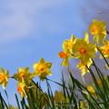 写真: 春のよろこび