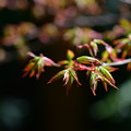 写真: 春への期待