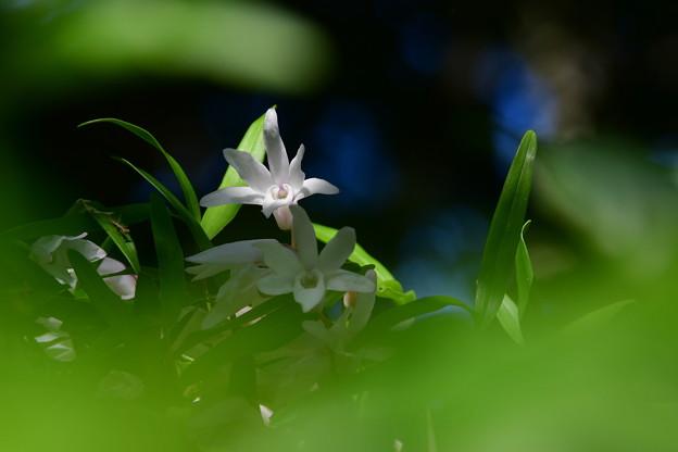写真: 樹上の花