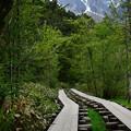 写真: 穂高の見える木道