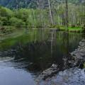 写真: 岳沢湿原