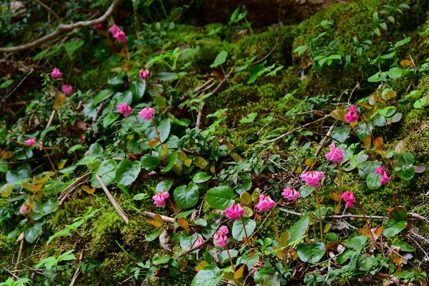 写真: 崖の上に咲く
