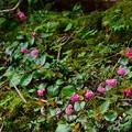 Photos: 崖の上に咲く