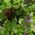 写真: 小梨平のお猿さん
