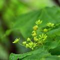 写真: 大きな葉陰に小さなお花が見えました