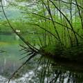 写真: 大正池へ