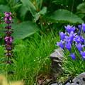 写真: お花たちの夏