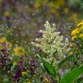 写真: 花々の競演