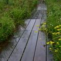 写真: 秋の木道は雨・・・