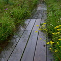 Photos: 秋の木道は雨・・・