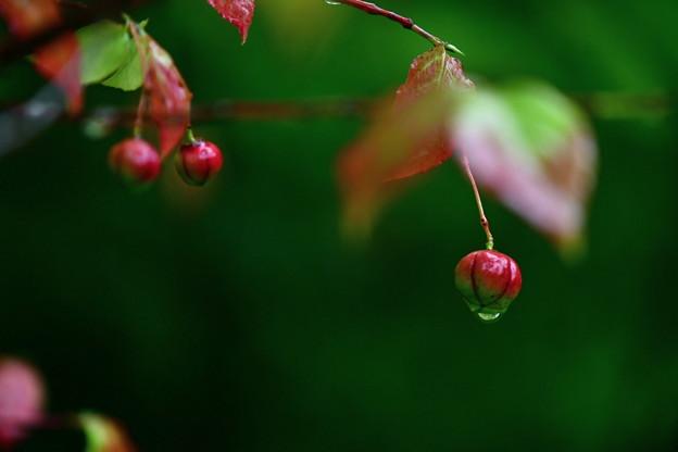 写真: 秋を待つ