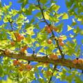 写真: 秋~~~見つけました