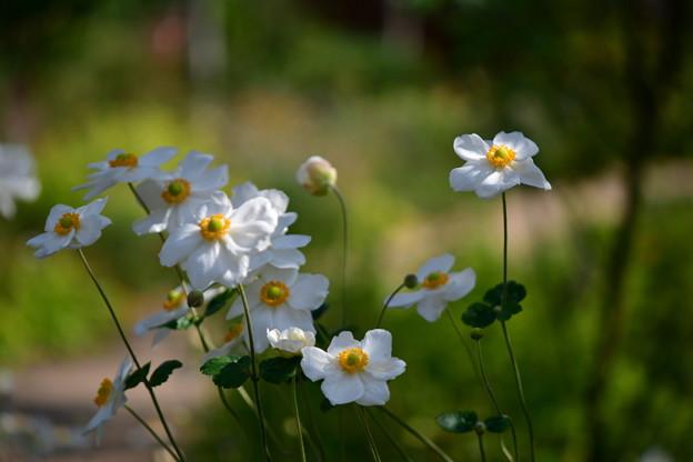 写真: 白い花