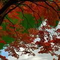 写真: 小さな葉っぱの大きな秋