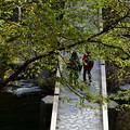 Photos: 晩秋にハイキングを