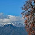 柿と新雪の山