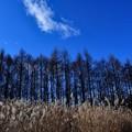 写真: 晩秋の青空