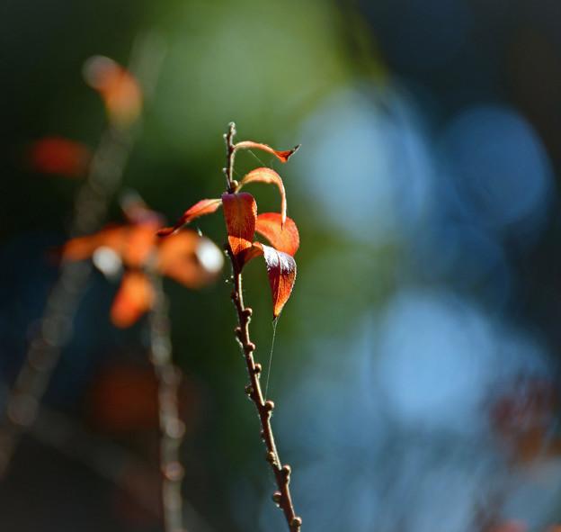 写真: 暖かな午後