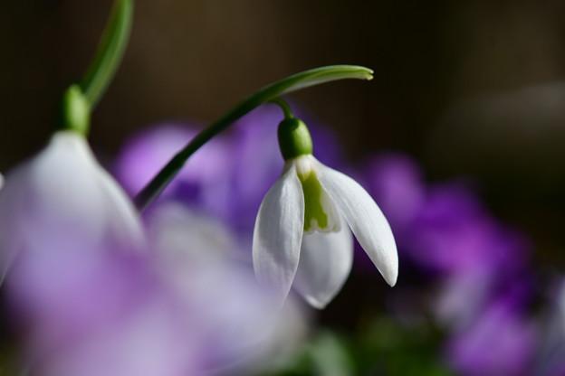 写真: 一足早く春を感じて