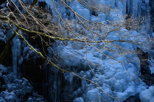 Photos: 立春のツララ