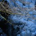 写真: 立春のツララ