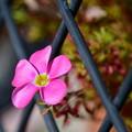 写真: 桃の輝き