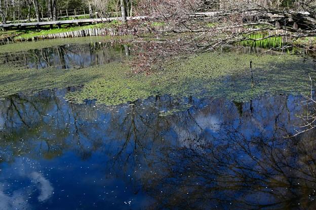 Photos: 小さな沼の春