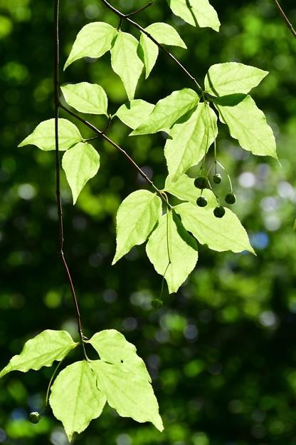 Photos: 緑の葉かげにちょこんと・・