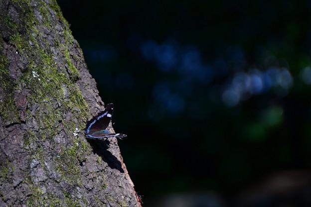 ことし初めての蝶さんは・・・